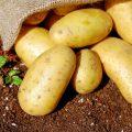 brambory-uskladneni